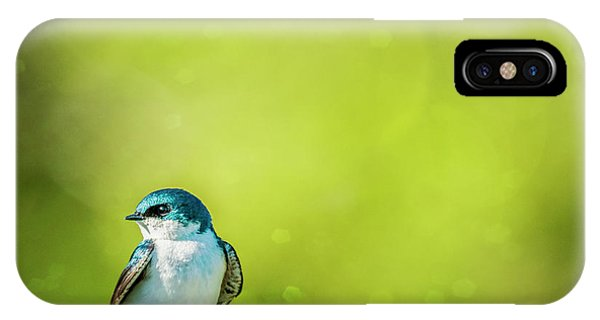 Spring Swallow IPhone Case