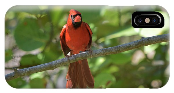 Spring Training Cardinal IPhone Case