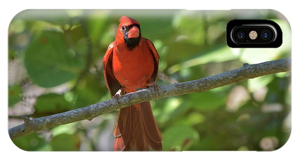 Spring Training Cardinal IPhone Case