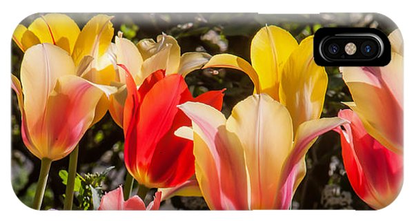 Spring Tuliips IPhone Case