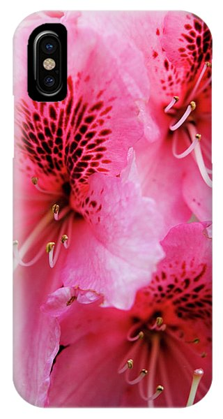 Springtime Azalea IPhone Case