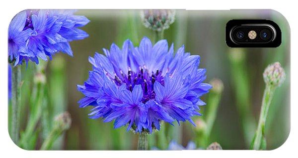 Springtime Blues IPhone Case