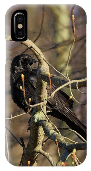 Springtime Crow IPhone Case