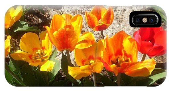 Springtime Flowers IPhone Case