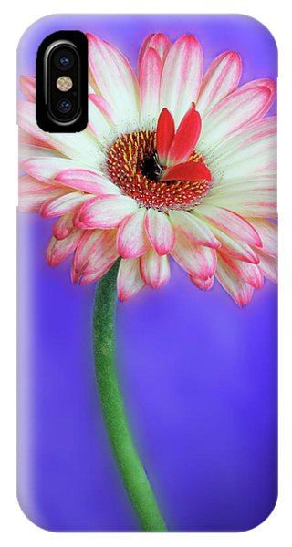 Sprouting Dahlia IPhone Case