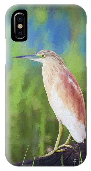 Squacco Heron Ardeola Ralloides IPhone Case