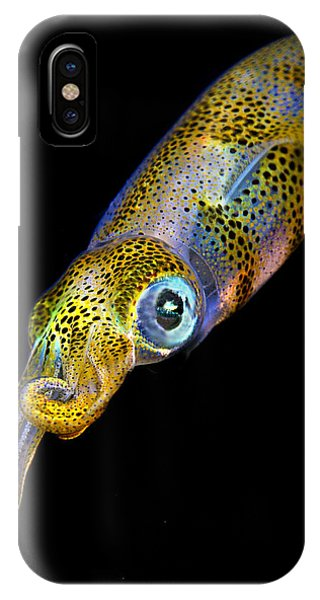 Squid iPhone Case - Squid At Night by Rico Besserdich