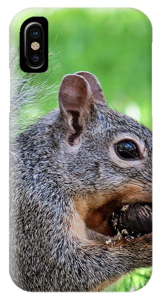Squirrel 1 IPhone Case