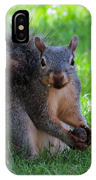 Squirrel 2 IPhone Case