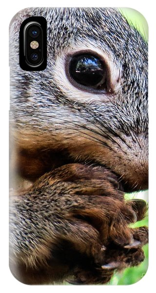 Squirrel 3 IPhone Case