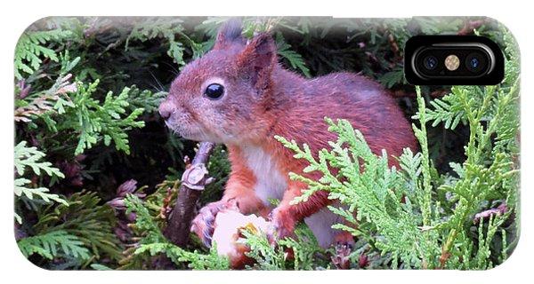 Squirrel 3 IPhone Case