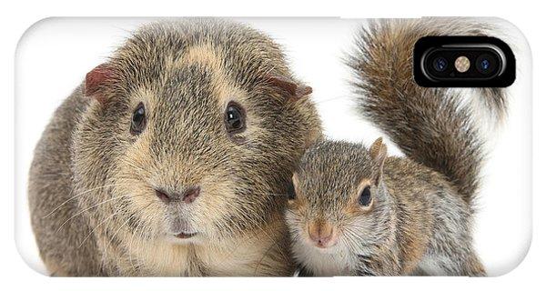 Squirrel And Guinea IPhone Case