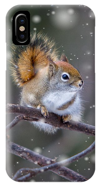Squirrel Balancing Act IPhone Case