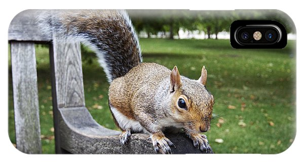 Squirrel Bench IPhone Case