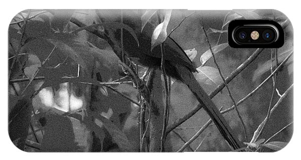 Squirrel Cuckoo  IPhone Case
