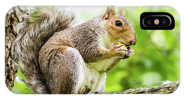 Squirrel Eating On A Branch IPhone Case