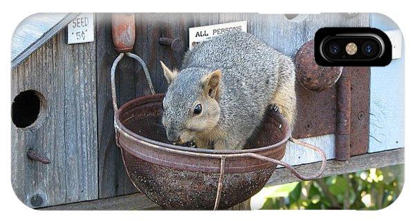 Squirrel Feeding IPhone Case