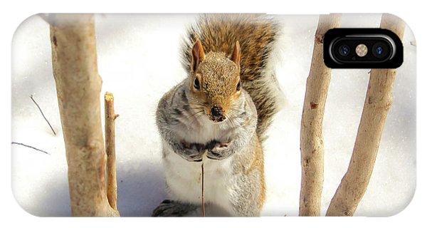 Squirrel In Snow IPhone Case
