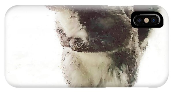 IPhone Case featuring the photograph Squirrel In The Snow by Roger Bester