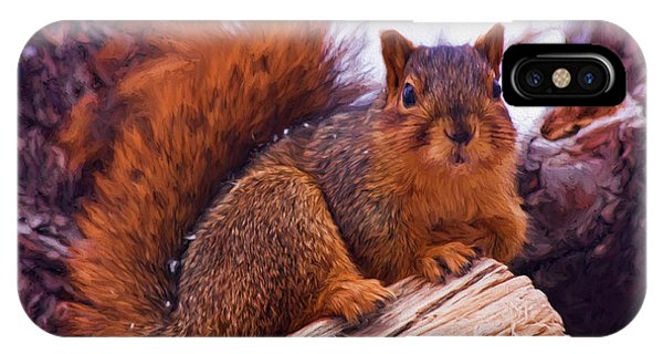 Squirrel In Tree IPhone Case