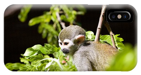 Squirrel Monkey Youngster IPhone Case