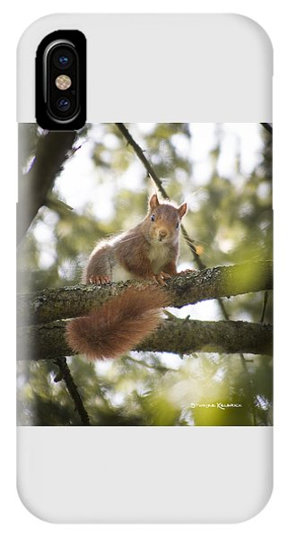 IPhone Case featuring the photograph Squirrel On The Spot by Stwayne Keubrick