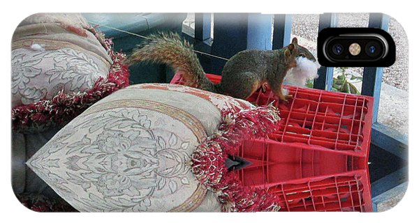 Squirrel Stealing Stuffing For A Nest IPhone Case
