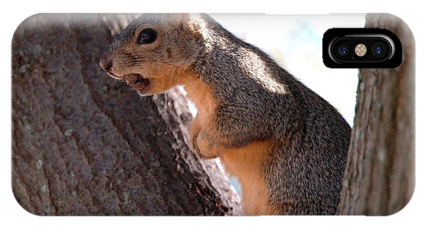 Squirrel With A Nut Phone Case by Teresa Blanton