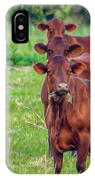 Stacked Up Cows          IPhone Case