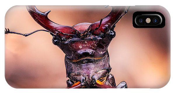 Stag Beetle Stare Down IPhone Case