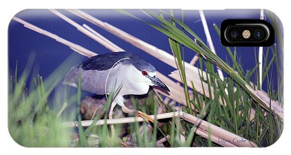 Horicon Marsh iPhone Case - Stalking Black Crowned Night Heron by Jayne Gohr