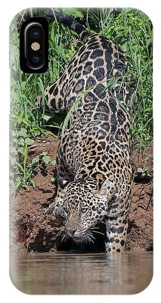 Stalking Jaguar IPhone Case