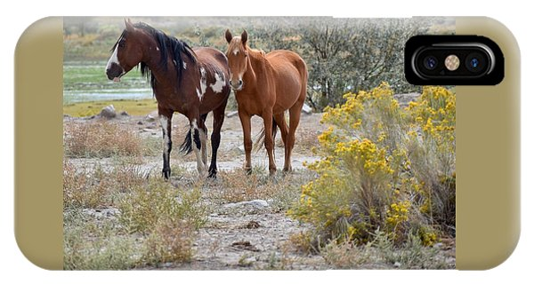 Stallion And Mare IPhone Case