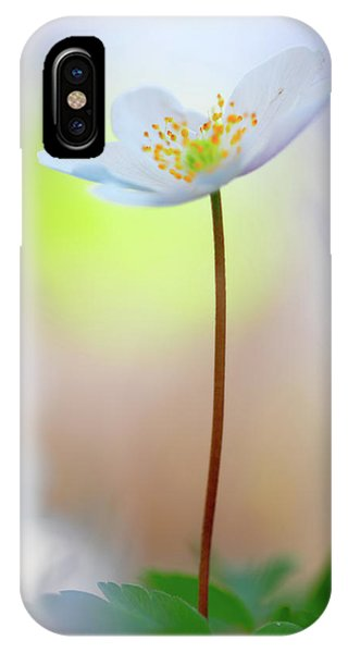 Standing Tall With Pride - Wood Anemone Wild Flower IPhone Case