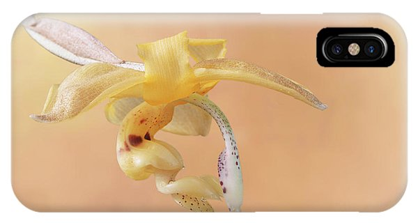 Stanhopea Orchid V2 IPhone Case