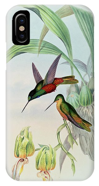 Humming Bird iPhone Case - Star Fronted Hummingbird by John Gould