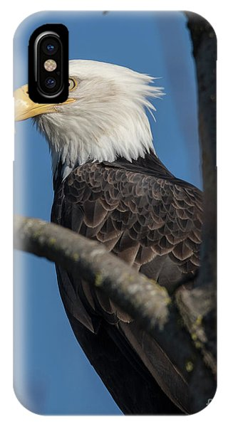 Staredown By Eagle  IPhone Case