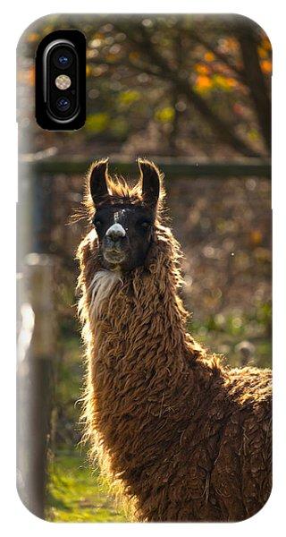 Staring Llama IPhone Case