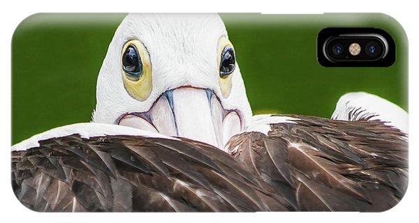 Staring Pelican IPhone Case