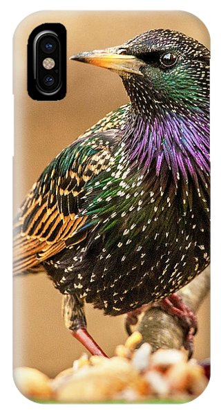 Starling In Glorious Color IPhone Case