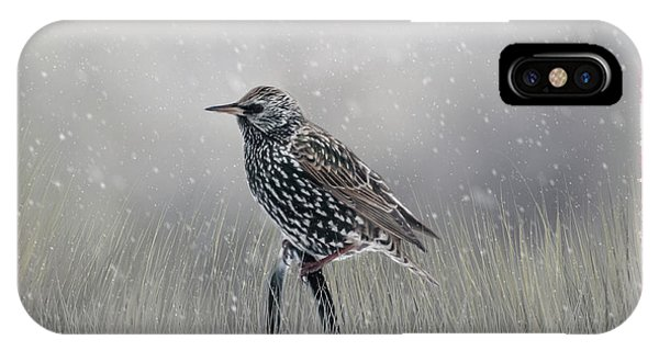 Starling In Winter IPhone Case