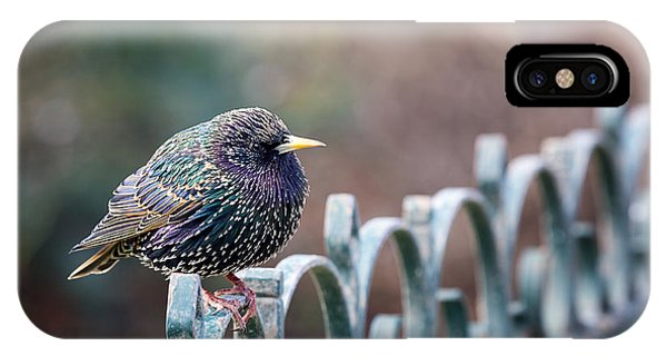 Starlings iPhone Case - Starling Juvenile Male by Jane Rix