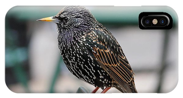 IPhone Case featuring the photograph Starling by Richard Reeve