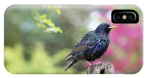 Starlings iPhone Case - Starling  by Tim Gainey