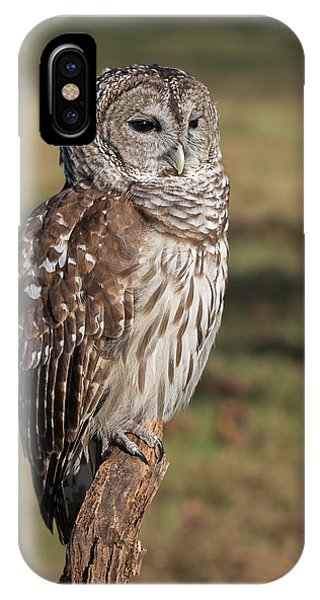 Stately Barred Owl IPhone Case