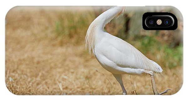 IPhone Case featuring the photograph Stately Walking Cattle Egret by Nick Biemans