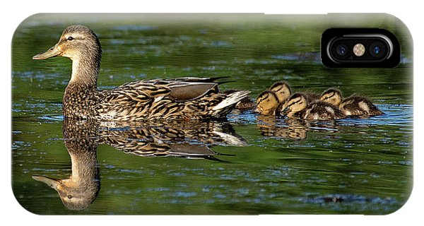 Mallard iPhone Case - Stay Close by Patrick Campbell