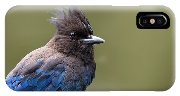 Steller's Jay Portrait IPhone Case