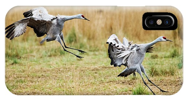Sandhill Crane iPhone Case - Stick The Landing by Mike Dawson
