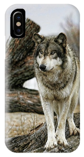 Still Wolf IPhone Case
